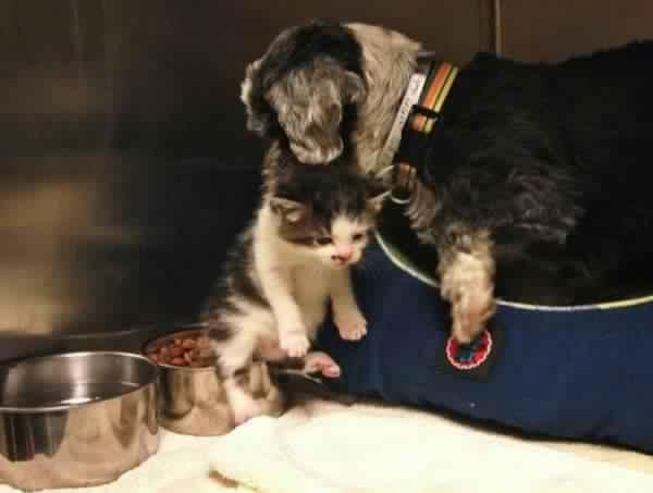 Ils descendent dans un ravin pour sauver un petit chien…Ce qu'ils découvrent est vraiment boulversant