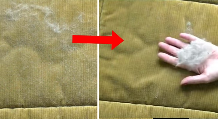 Retirer les poils des animaux du canapé? Voici la méthode la plus simple