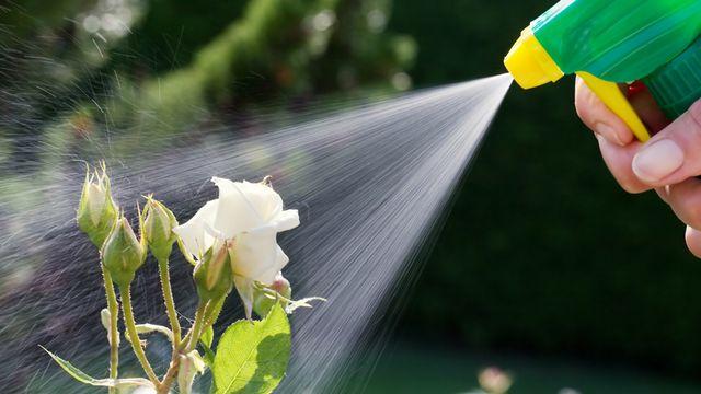 elle vous montre une recette pour faire un insecticide naturel au savon noir c 39 est fait maison. Black Bedroom Furniture Sets. Home Design Ideas