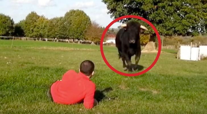 Un ancien taureau de corrida se dirige vers lui: les minutes qui suivent sont d'une beauté étonnante