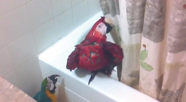 Il entre dans la salle de bain pour retrouver ses for Bain moussant fait maison
