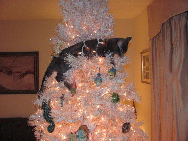 Quand les chats s attaquent au sapin de no l 31 photos - Quand faire le sapin de noel ...