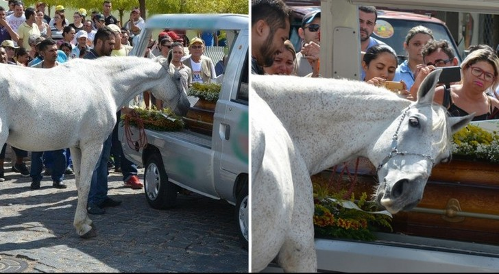 Le cheval assiste aux funérailles de son Maître: Sa réaction est déchirante!