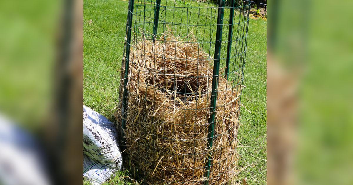 Arr tez d 39 acheter des pommes de terre voici comment cultiver un approvisionnement sans fin la - Cultiver des champignons de paris a la maison ...