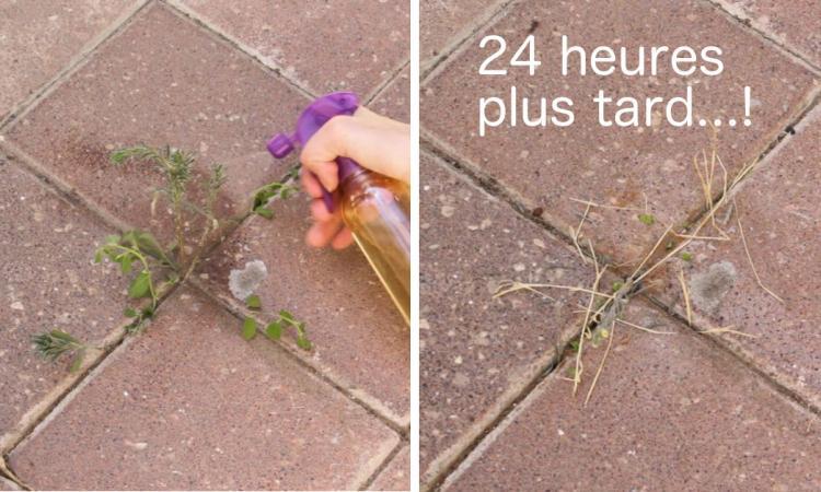 Voici comment pr parer un d sherbant naturel qui d truira toutes les mauvaises herbes en - Comment faire du desherbant ...