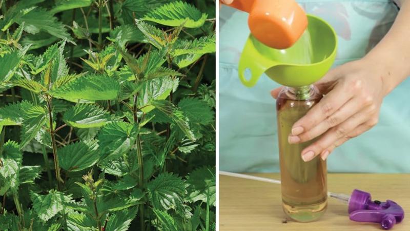 Voici comment faire pour se d barrasser des mauvaises herbes sans produits chimiques et sans - Comment tuer les mauvaises herbes ...