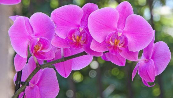 voici les 5 r gles d 39 or pour bien entretenir une orchid e c 39 est fait maison. Black Bedroom Furniture Sets. Home Design Ideas