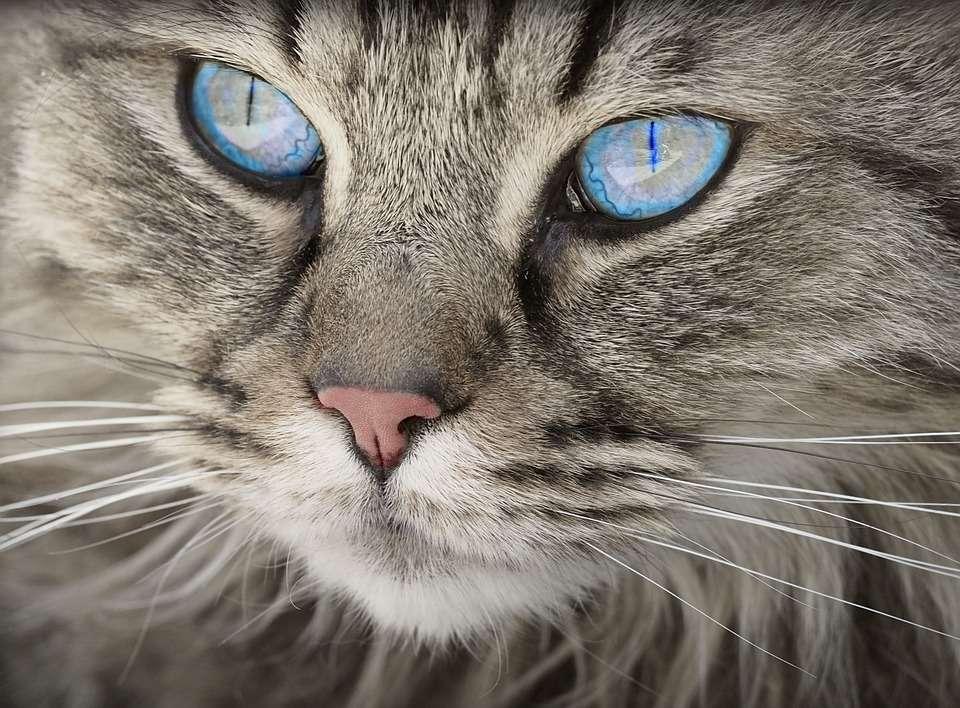 15 faits curieux sur les chats que vous ne connaissiez probablement pas