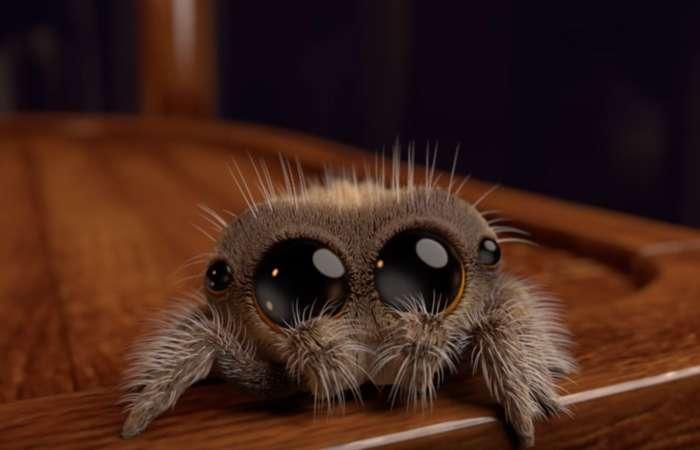 Lucas, l'araignée la plus adorable que même arachnophobes vont adorer