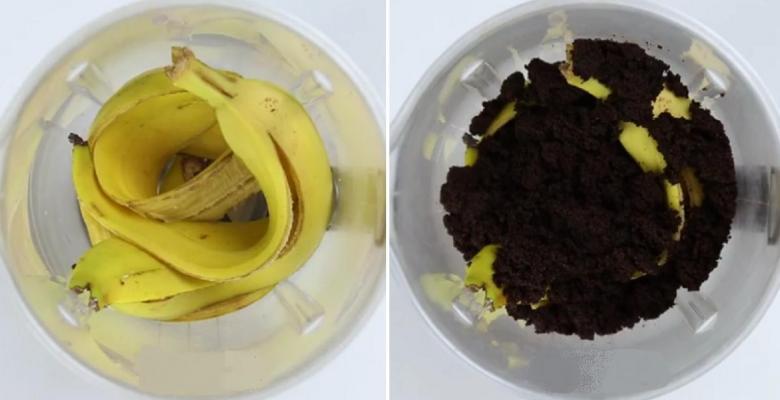 Elle m lange des peaux de bananes avec du marc de caf ce - Utilisation du marc de cafe au jardin ...