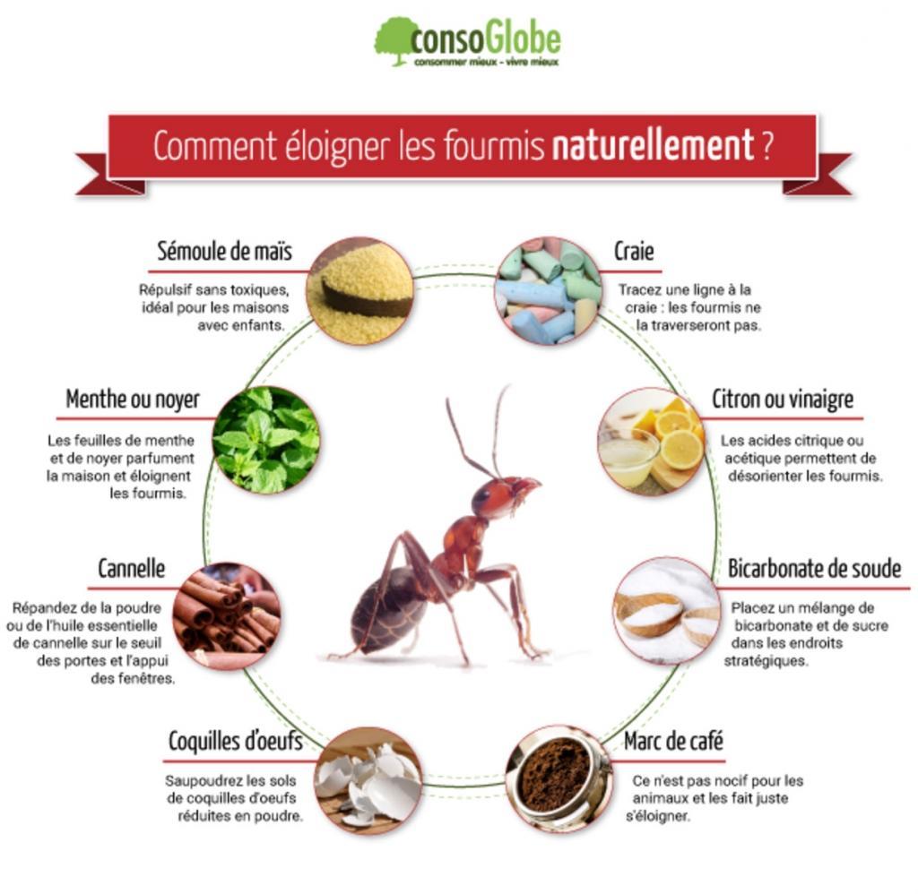 Astuces Naturelles Pour Se Débarrasser Des Fourmis 9 remèdes totalement naturels pour garder les fourmis loin