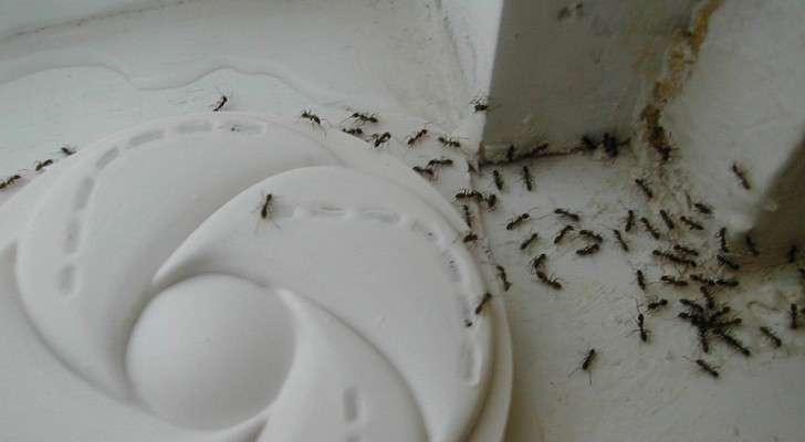 lib rez votre maison des fourmis avec cette astuce tr s simple c 39 est fait maison. Black Bedroom Furniture Sets. Home Design Ideas